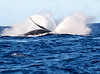 Maui Whales_2019 010