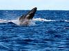 Maui Whales_2019 020