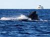 Maui Whales_2019 005