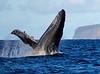 Maui Whales_2019 012