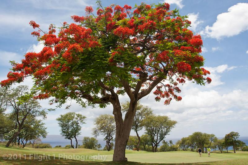 Wailea Emerald golf course