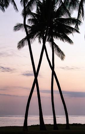 X Palms