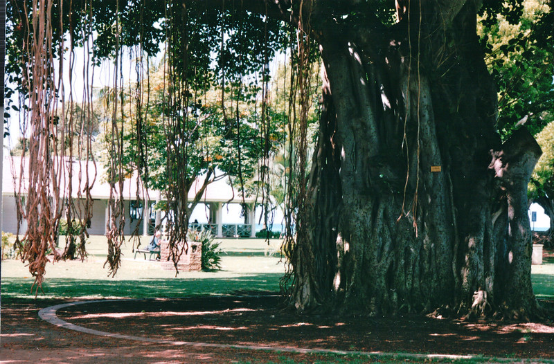 Banyan Tree in Waikiki Beach Park - Honolulu, O'ahu, Hawaii - April 23-29, 2003