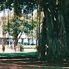 Banyan Tree in Waikiki Beach Park - Honolulu, O'ahu, Hawaii - April 23-29, 2003