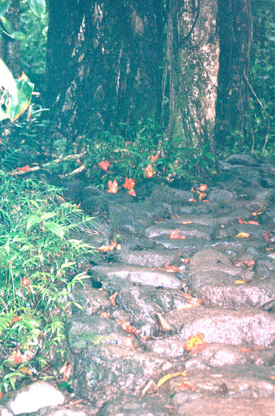 Flower-strewn Path - Manoa Falls - Honolulu, O'ahu, Hawaii - April 23-29, 2003<br /> The trail to the falls is 1-1/2 miles on a well-worn path.