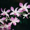 Orchids - Honolulu, O'ahu, Hawaii - April 23-29, 2003