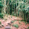 Path Back to Manoa Falls - Honolulu, O'ahu, Hawaii - April 23-29, 2003<br /> The trail has rainforest and bamboo forest and is at the base of the Ko'oaus Mountains.