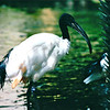 Ibis - Hilton Hawaiian Village - Honolulu, O'ahu, Hawaii - April 23-29, 2003