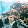 Waikiki Aquarium - Honolulu, O'ahu, Hawaii - April 23-29, 2003<br /> The third oldest aquarium in the U.S. is located next to a living reef on the Waikiki shoreline.  Over 2500 organisms in the exhibits represent more than 420 species of aquatic animals and plants.