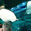 Randal Watches Stingrays in a Store's Aquarium - Honolulu, O'ahu, Hawaii - April 23-29, 2003