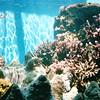Waikiki Aquarium - Honolulu, O'ahu, Hawaii - April 23-29, 2003