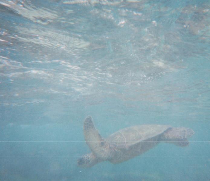 Sea Turtle - Underwater Scenes From Randal's Scuba Diving - Honolulu, O'ahu, Hawaii - April 23-29, 2003