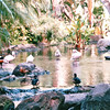 Ducks, Flamingos, Ibis All in Beautiful Setting - Hilton Hawaiian Village - Honolulu, O'ahu, Hawaii - April 23-29, 2003