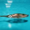 Squid - Waikiki Aquarium - Honolulu, O'ahu, Hawaii - April 23-29, 2003