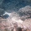Underwater Scenes From Randal's Scuba Diving - Honolulu, O'ahu, Hawaii - April 23-29, 2003