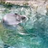 Monk Seal  - Honolulu, O'ahu, Hawaii - April 23-29, 2003