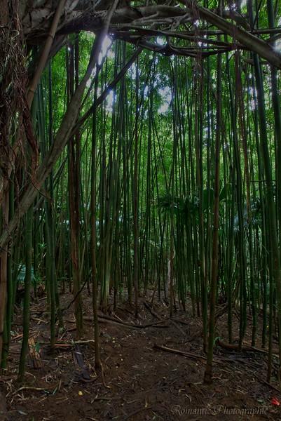 A bamboo jungle.