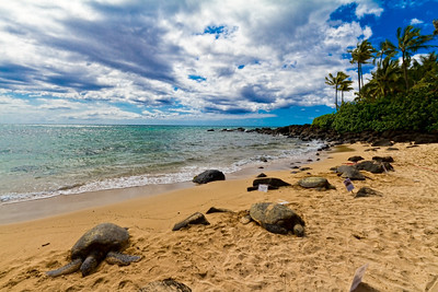 Turtle Beach on the north shore
