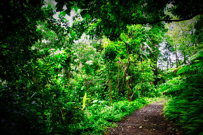 A Trail in a Rain Forest