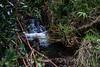 Waterfall 6577