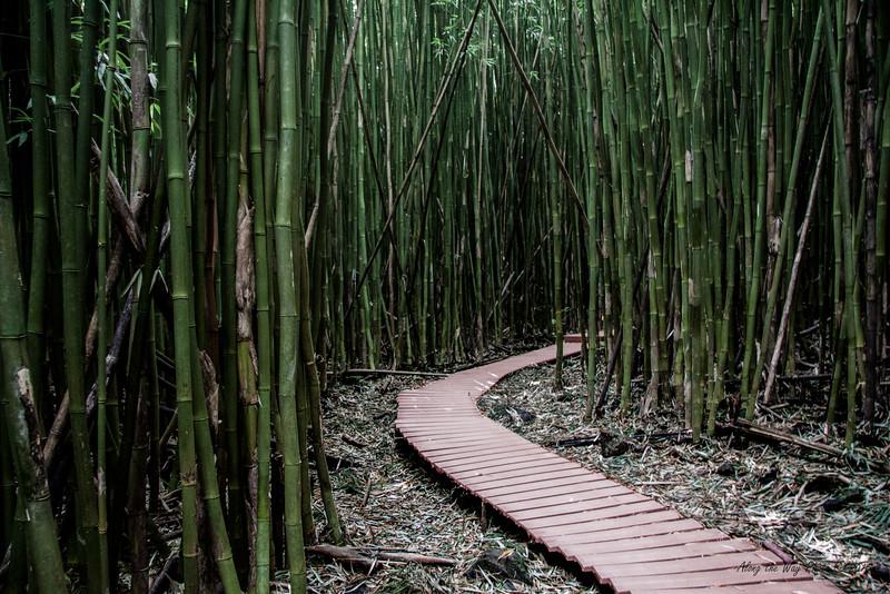 Bamboo 6555