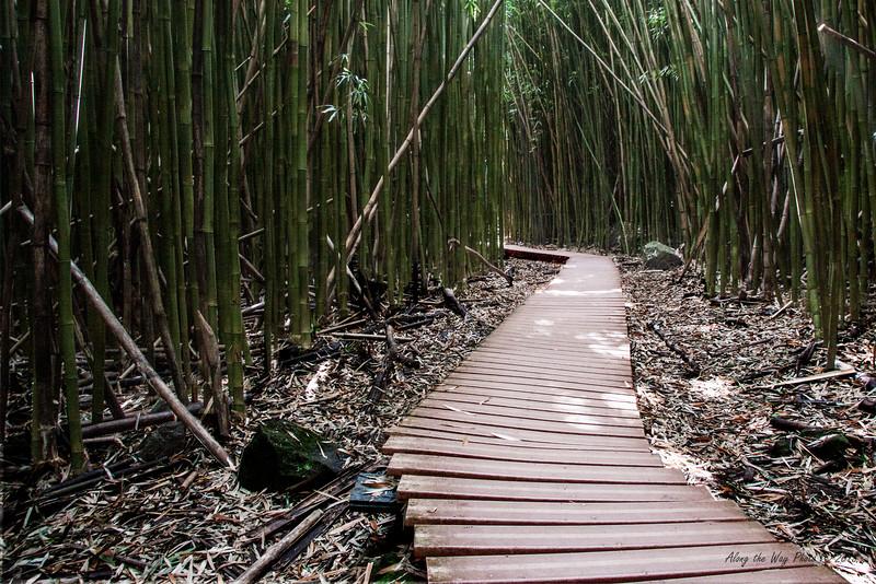 Bamboo 6540