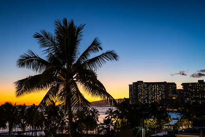 A palm tree silhouetted against the evening sky with the lights of a hotel in the distance along the beaches of Waikiki on the island of Oahu