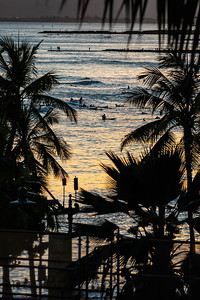 A view of surfers framed by the silhouette of palm trees as they ride the waves