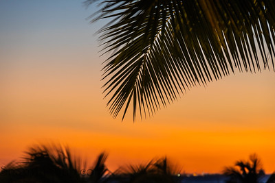 The leaves of a palm tree silhouetted against the soft colors of an evening sky