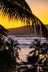 A palm tree silhouette against the ocean and the sun setting behind a mountain