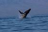 Whale 6866
