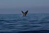 Whale 6840