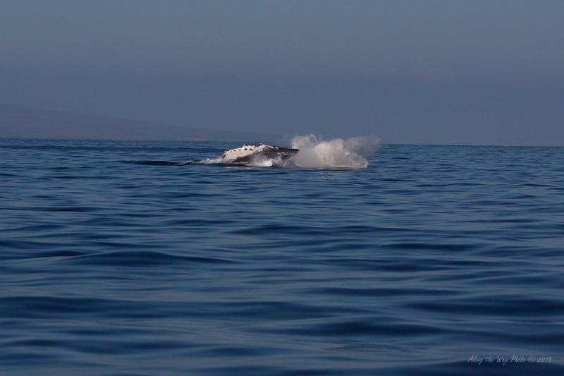 Whale 6848