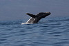 Whale 6867