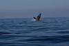 Whale 6839
