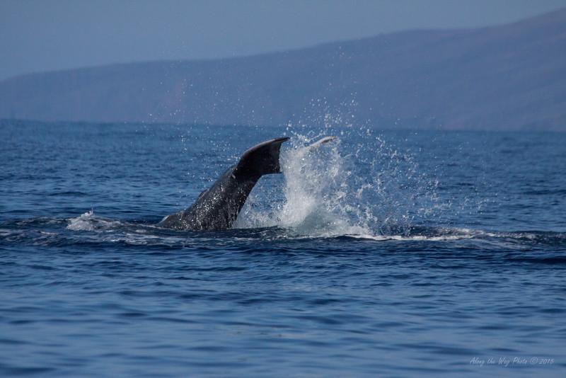 Whale 6997
