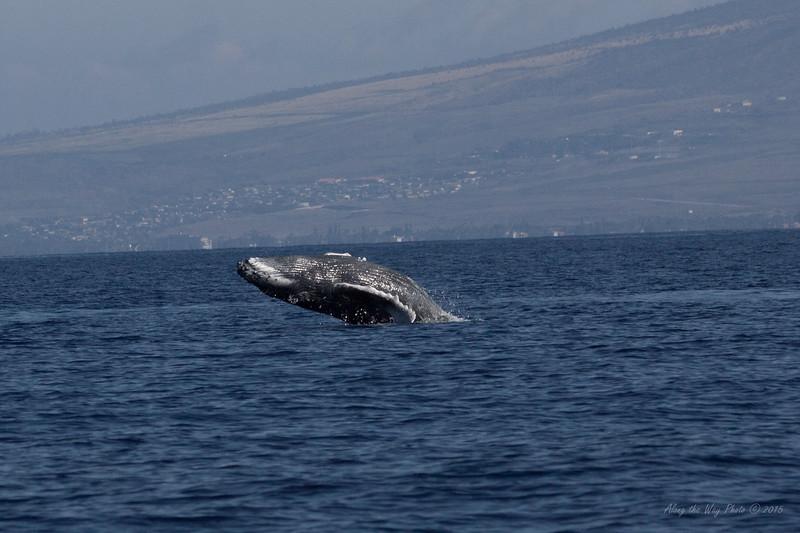 Whale 7114