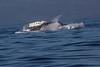 Whale6868