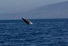 Whale 7113