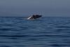 Whale 6847