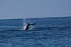Whale 6969