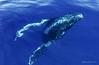Whale 2875