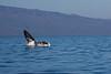 Whale 6886