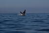 Whale 6845