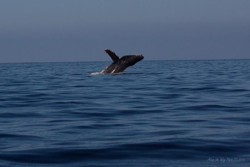 Whale 6841