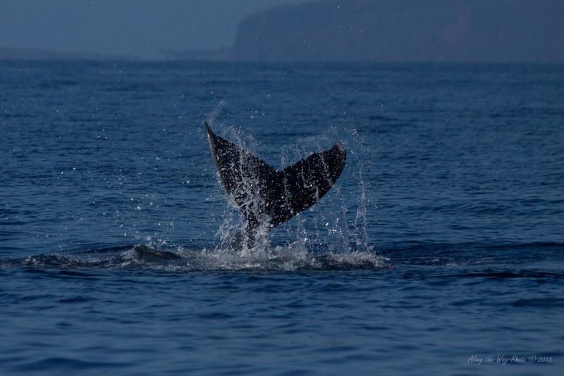 Whale 6992