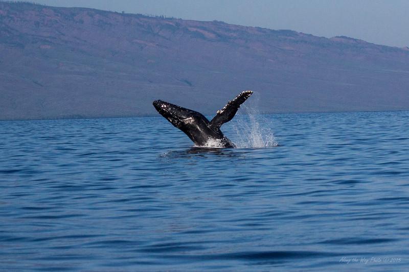 Whale 6887