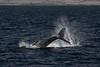Whale 7633
