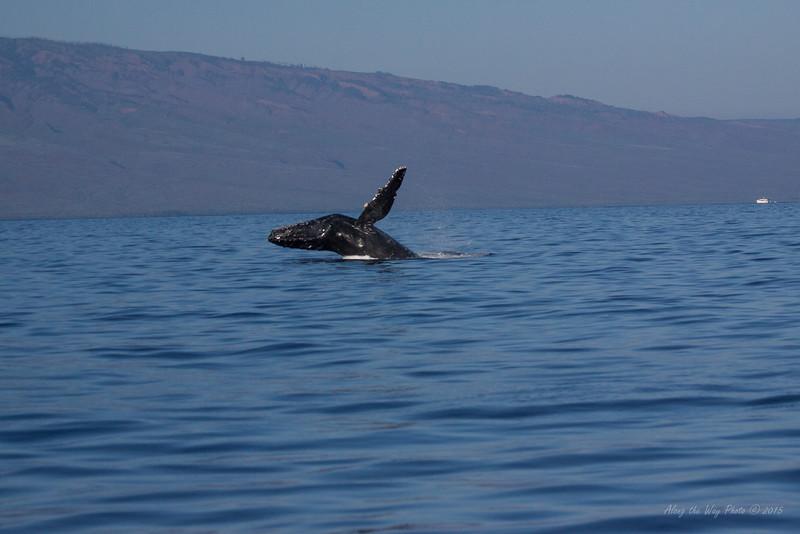 Whale 6888