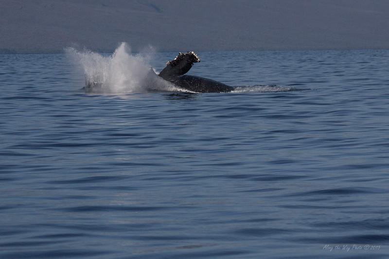 Whale 6889
